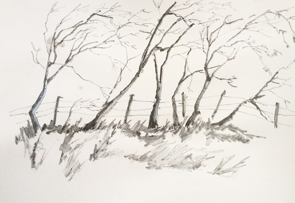 """TREES I""  Pencil Drawing.   SOLD"